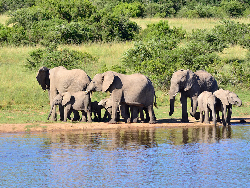 Lalibela Game Reserve - elephants at the waterhole