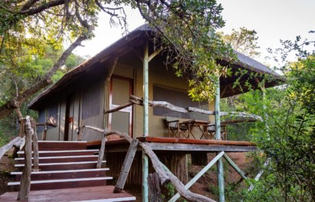 Lalibela Game Reserve - Tree Tops - Exterior of the luxury tent