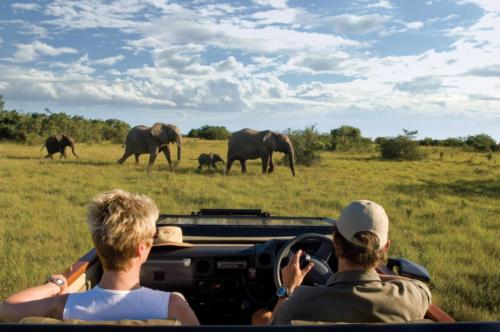 Guest game drive Elephants